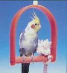 Penn Plax Acrylic Swing with Pedicure Perch Small