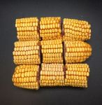 9pk Drilled Corn-Happy Beaks Made In The USA