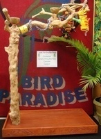 Bird Paradise Small Java Tree